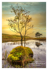 A lonely tree on Kelly Hall Tarn