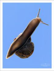 A Garden Snail on glass against a blue sky