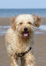 Barney on the beach