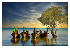 Long-Tail boats moored next to a Mangrove in Krabi, Thailand