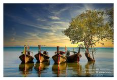 Long-tailboars moored against a Mangrove in Krabi, Thailand
