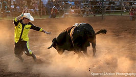 Bull Fighting.jpg