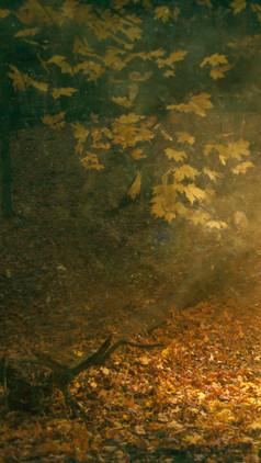 firewoods2.jpg