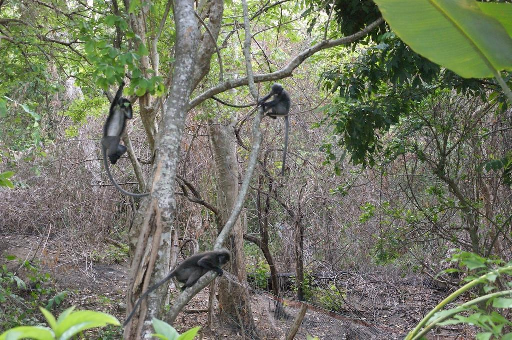 Monkey business in our backyard.
