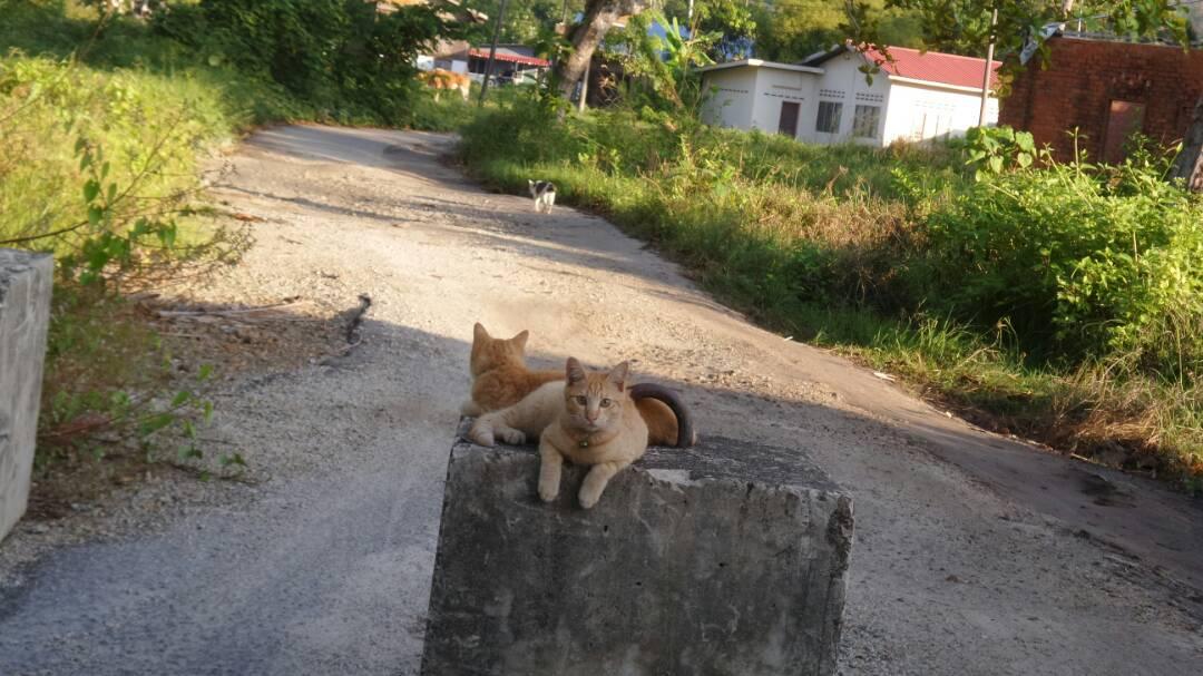 Neighbourhood kittens