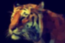 Adesivo de Parede S015 - Tigre 3D 150x10