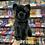Thumbnail: BLACK CAT SALEM PLUSH