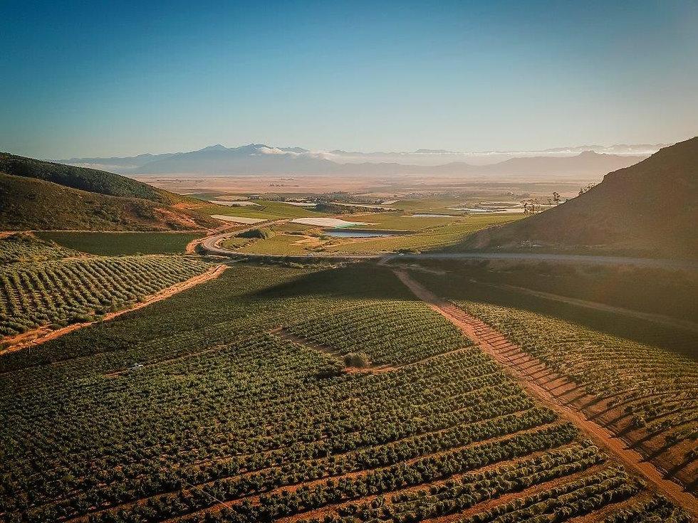 drone vineyards.jpg