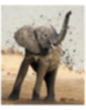 2019.AI.PR.11x14.Elephant.png
