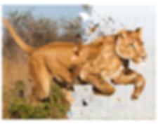 2019.AI.PR.14x11.Lionness.png