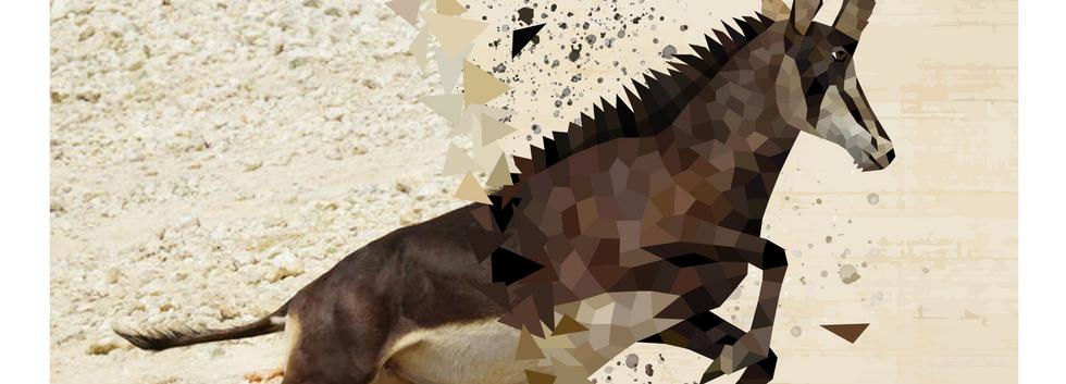 2019.AI.PR.14x11.Antelope.png