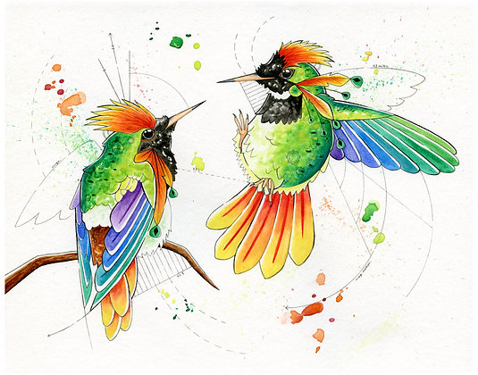 Rufous-Crested Coquette Hummingbirds