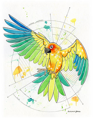 2020.WC.OR.11x14.Sun Parakeet.jpg