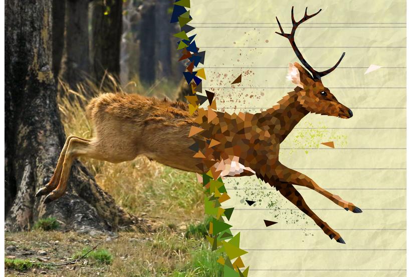 2019.AI.PR.14x11.Deer.png