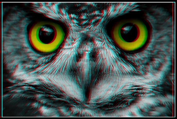 owl 3D ajones.jpg