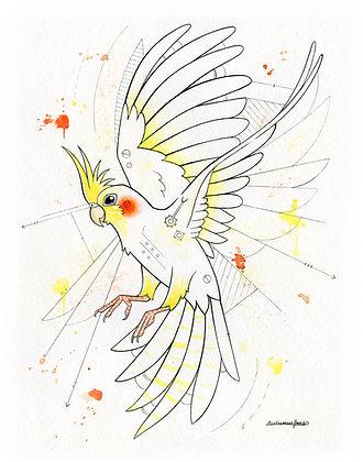 White Cockatiel