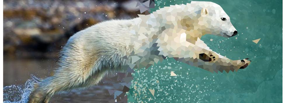 2019.AI.PR.14x11.Polarbear.png