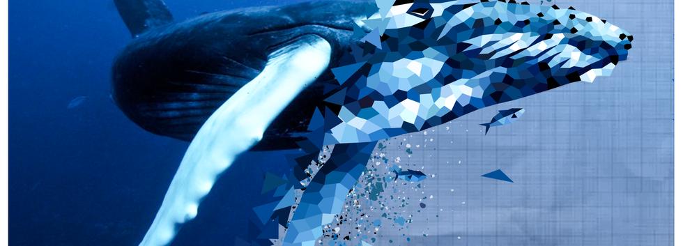 2019.AI.PR.14x11.Whale.png