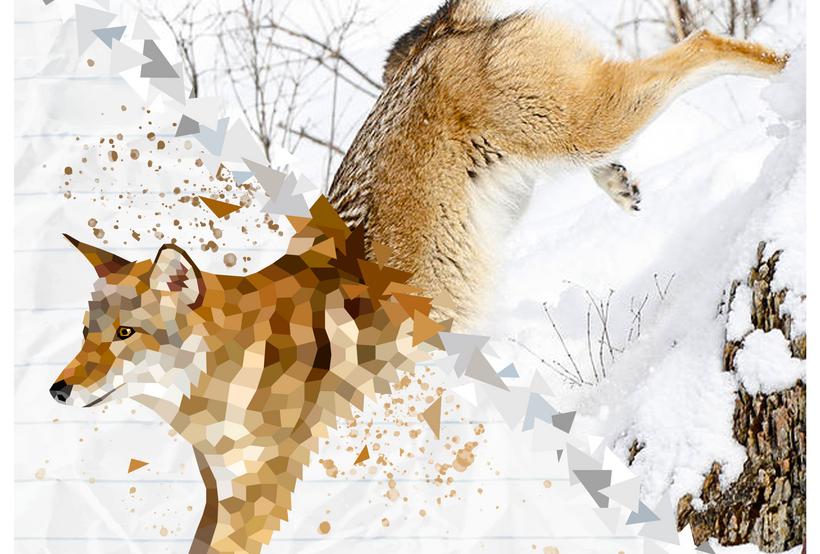 2019.AI.PR.14x11.Coyote.png