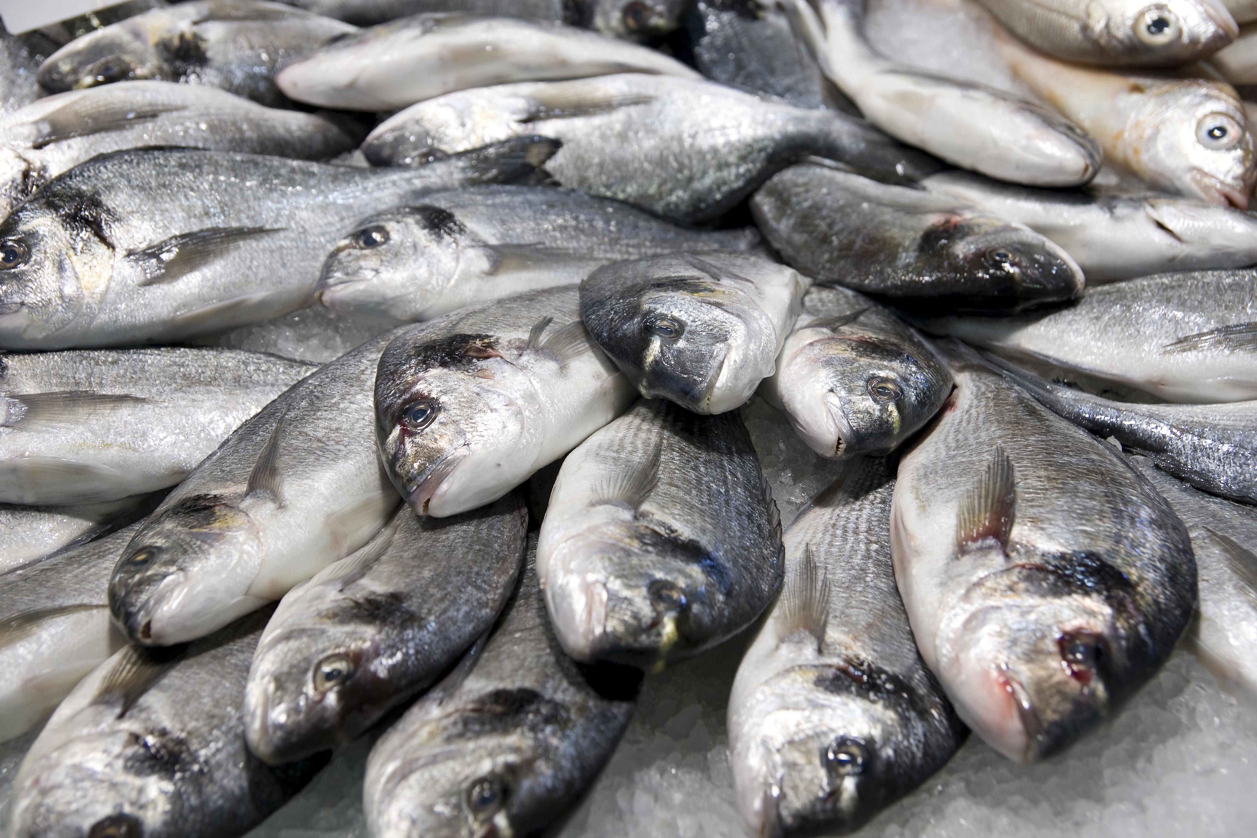 Peixe fresco e congelado