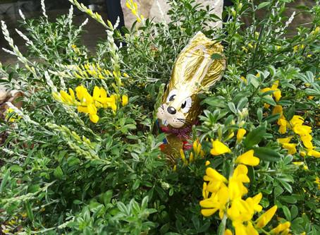 Le jardin s'habille pour le printemps