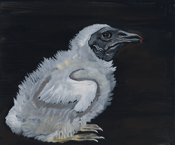 Vulture fluff