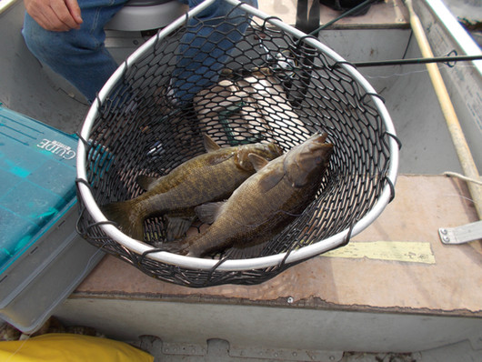 smallmoth bass Canada
