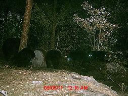 Black Bear hunts in Ontario Canada.JPG