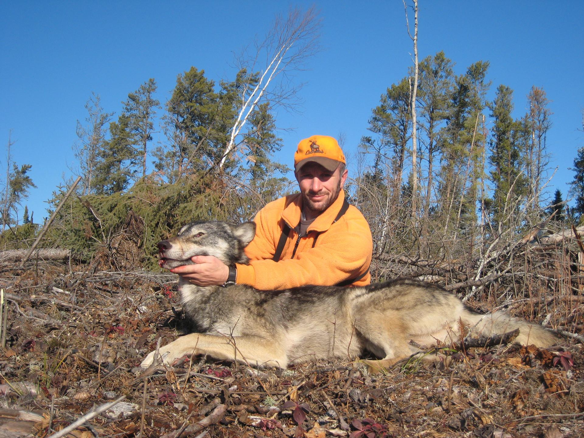 Ontario wolf hunt