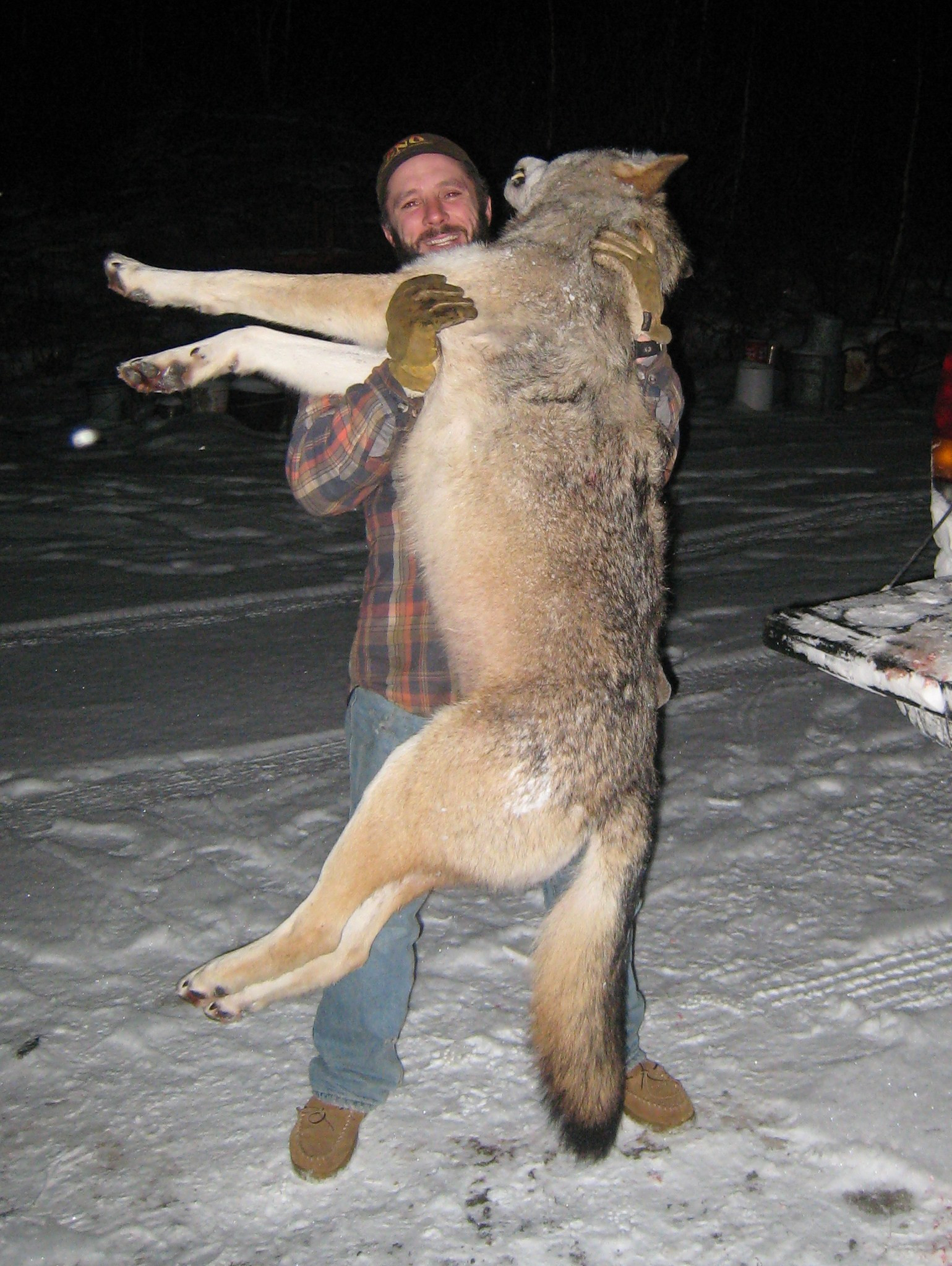Wolf hunting outfitter