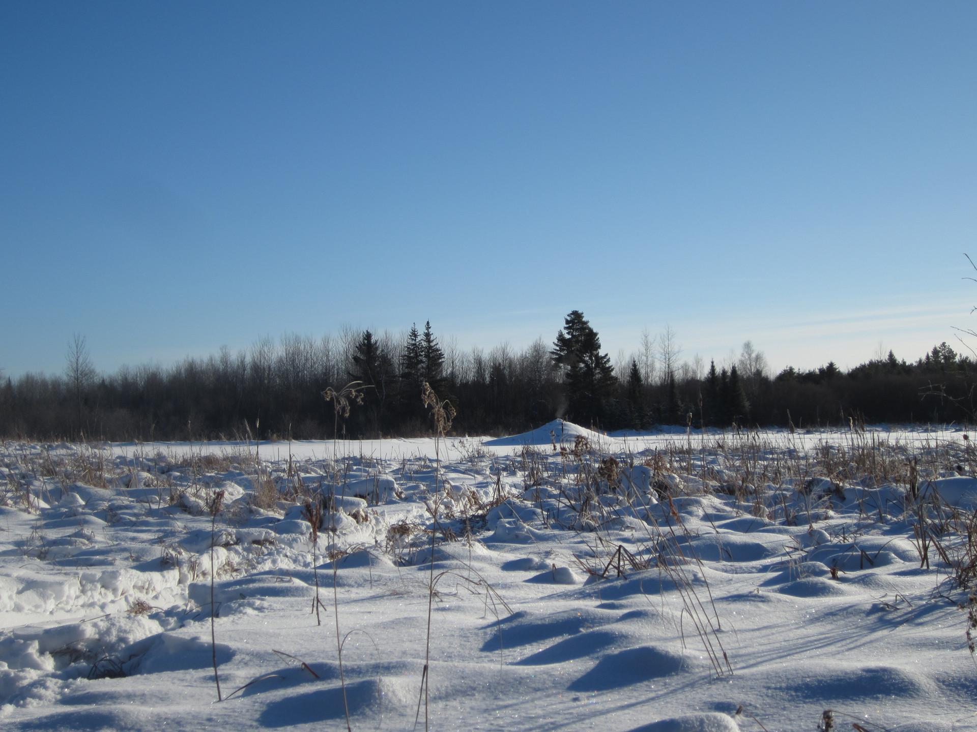 wolf hunting Ontario