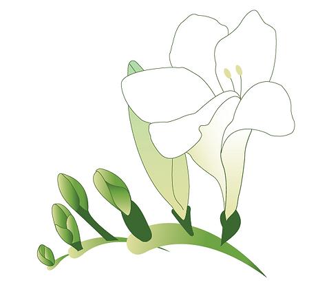 Floal Flower Iris Vector Illustration