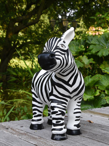 Zebra donkey