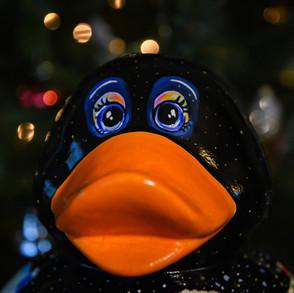 """Christmas Duck"""