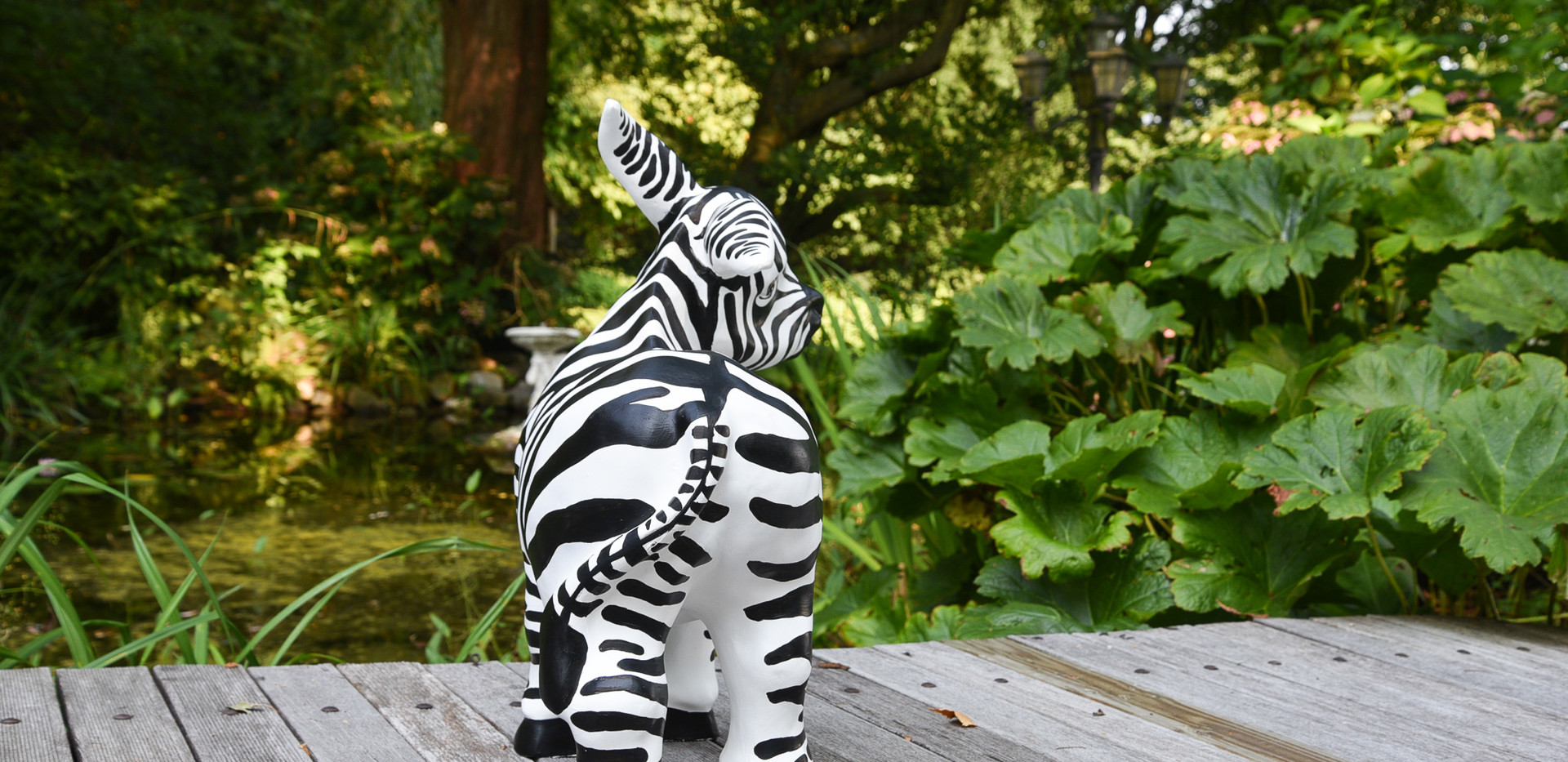 """""""Zebra Donkey"""""""
