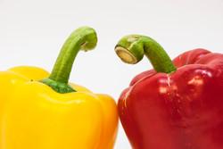 Studio photoshoot - vegetables