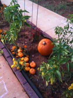 Marigolds and pumpkins