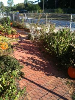 Herb garden year 2