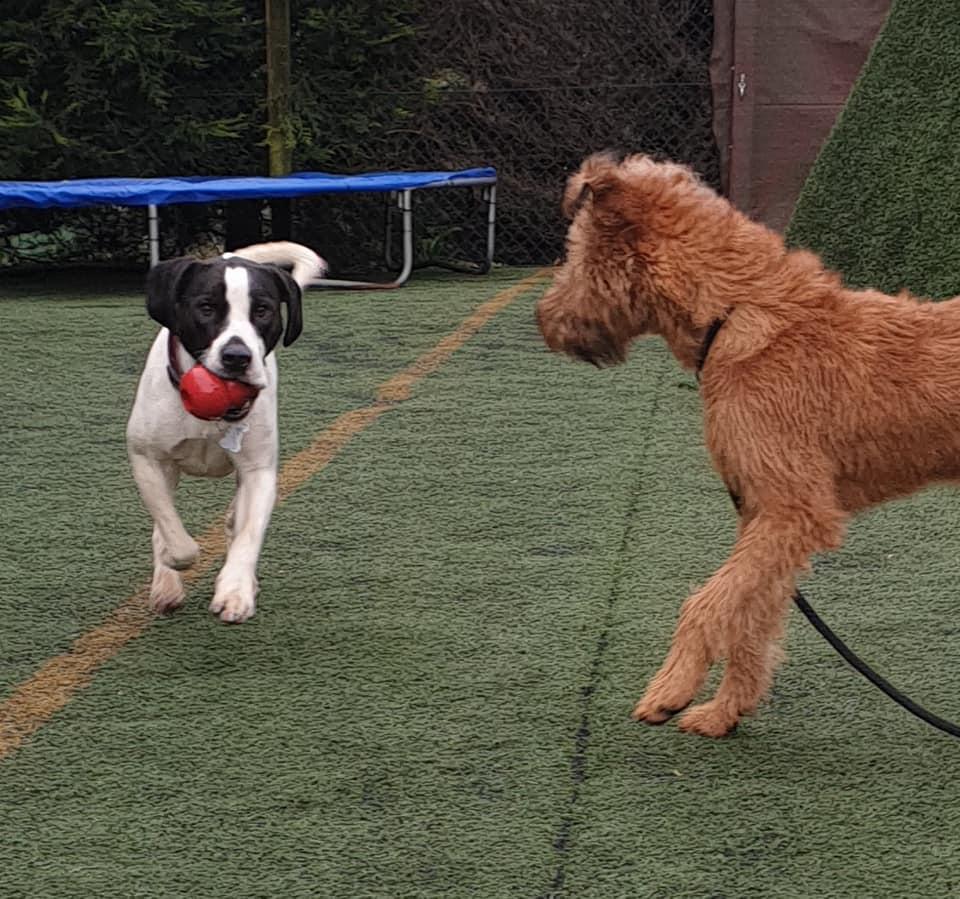 ball play