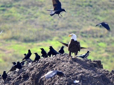 Environmental study proves the impact of plastic on our avian wildlife