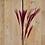 Thumbnail: Federgras Bordeaux