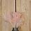 Thumbnail: Broom Bloom Rosa