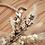 "Thumbnail: Trockenblumen Loop ""Fiona"""