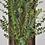 Thumbnail: Eucalyptus Baby-Blue