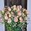Thumbnail: Polyantha-Rosen-Strauss Rosa