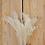 "Thumbnail: Broom Bloom ""gebleicht"""