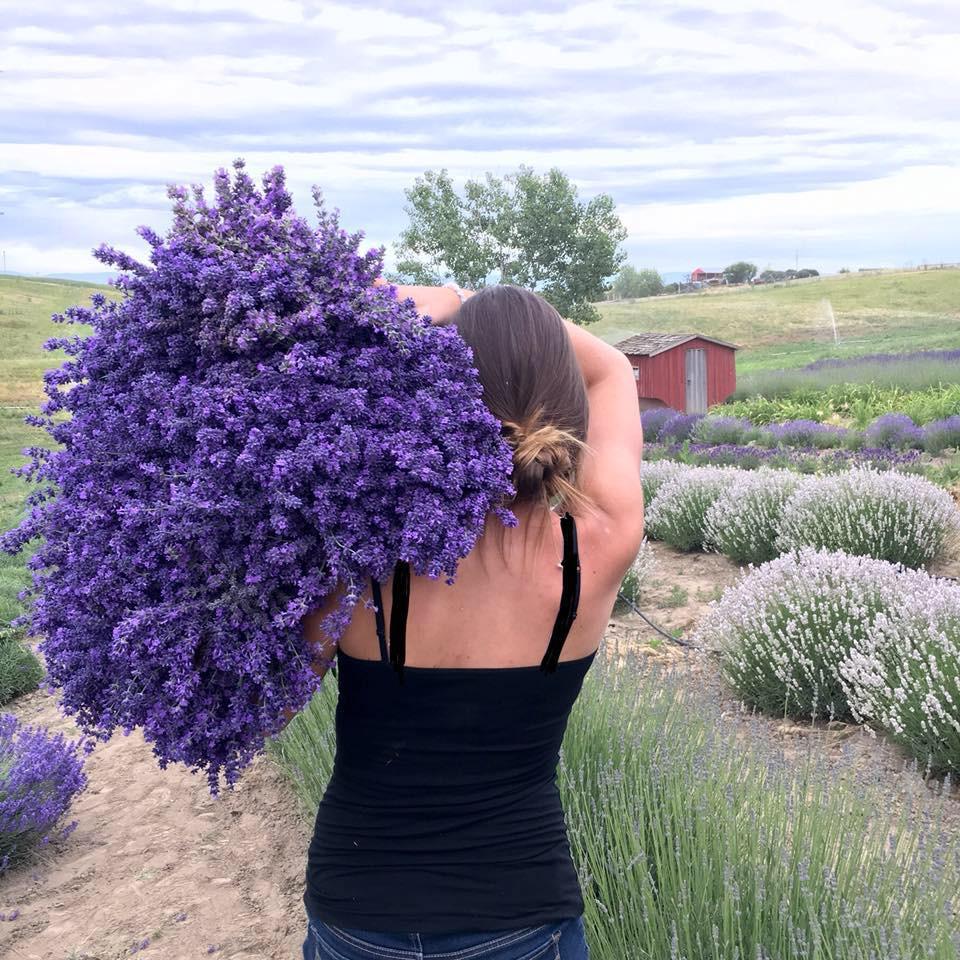 Lavender Gift Shop | Blue Mountain Lavender Farm | United States