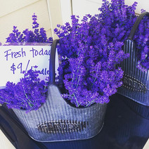 June 3_ Fresh lavender, sunny skies and