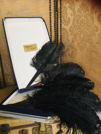 SOLD Set of Six Vintage Ostrich Feathers