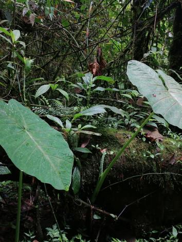 santuario otun quimbaya.jpg